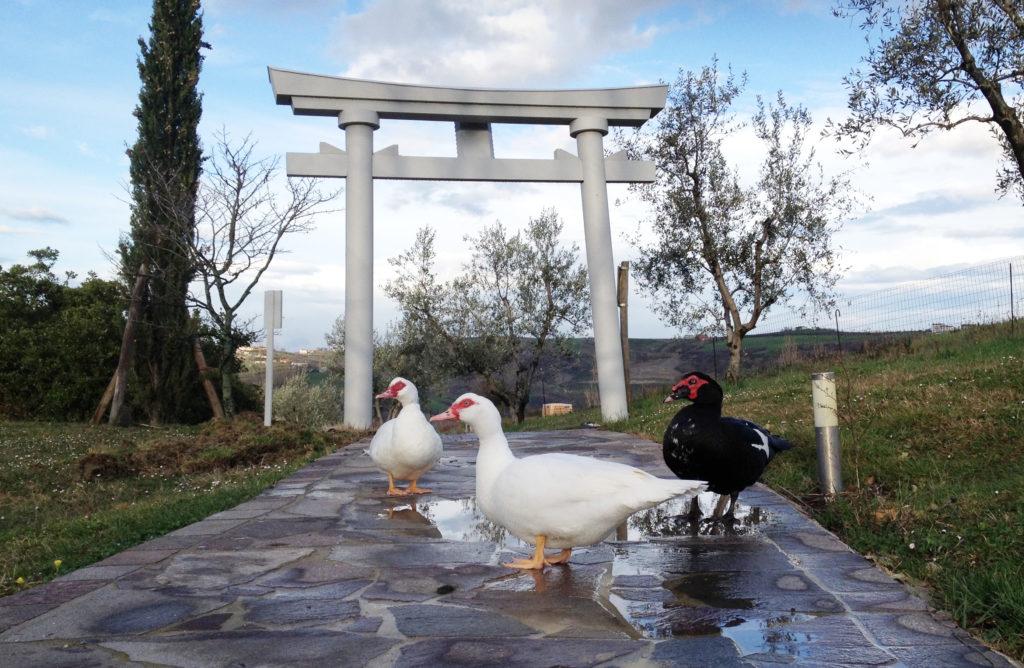 Torii del San Marino Jinja
